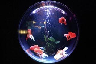 1841424103-fish-bowl-846060_1920-vgkg-480x320-MM-100-min.jpg